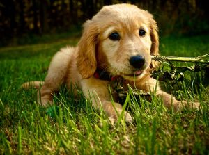 8 Things That Will Absolutely Happen When You Get a Puppy