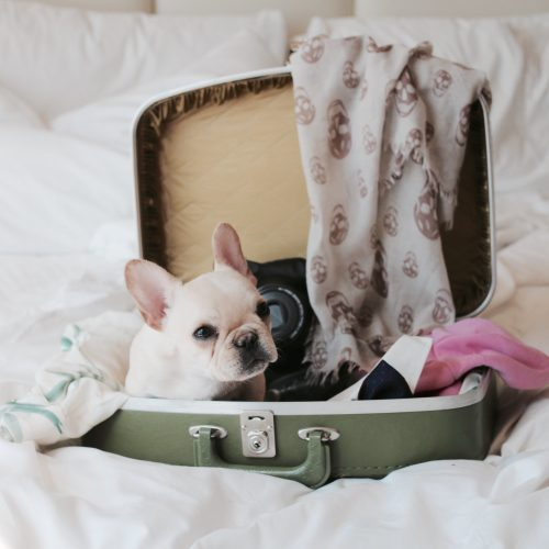 8 Things to Know Before You Fly with Your Pet