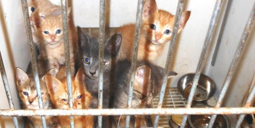 Abandoning Pets Causes Problems for More Than Animals