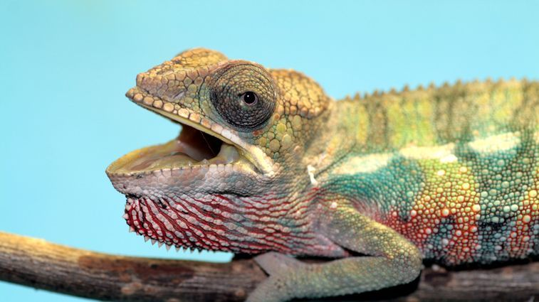WILD AT HOME: EXOTIC ANIMALS AS PETS