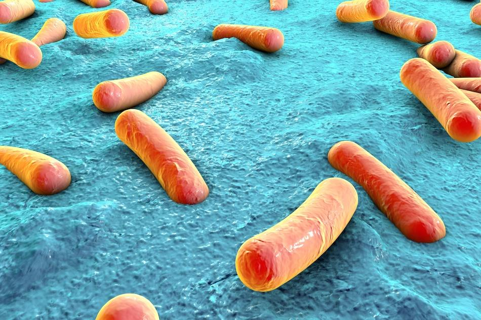 How Does Diet Affect the Human Microbiome?