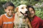 Pet, any animal kept by human beings as a source of companionship and pleasure.